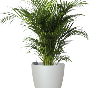 plastic-pot-recyclable-planter-mate-indoor-self-watering-light-grey-plant